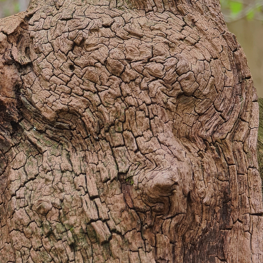 Waldwesen