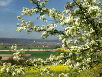 Zur Rapsblüte am Gehrdener Berg