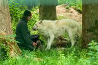 Wolfsjunge