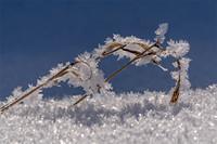 Winter in Bennigsen 2021
